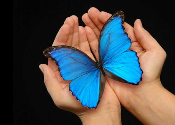 Hands holding blue butterfly